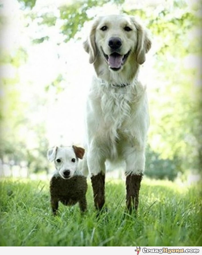 short-tall-dogplaying-mud-humor